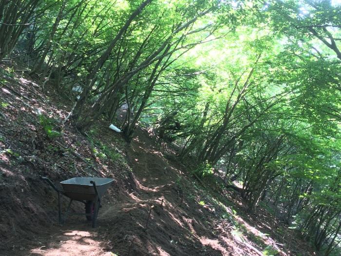 un sentiero nel bosco ed una carriola sul sentiero