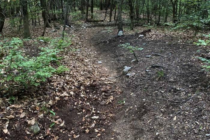 un sentiero di montagna coperto di foglie fa una curva a destra con sponda