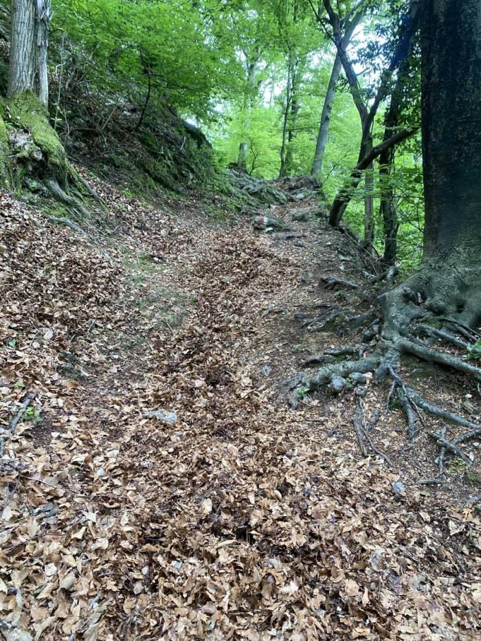 foglie su un sentiero di montagna prima della manutenzione