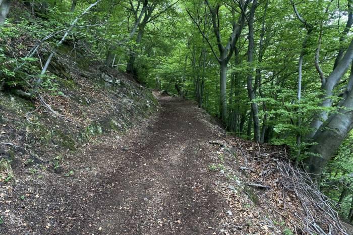 un sentiero di montagna appena pulito da volontari