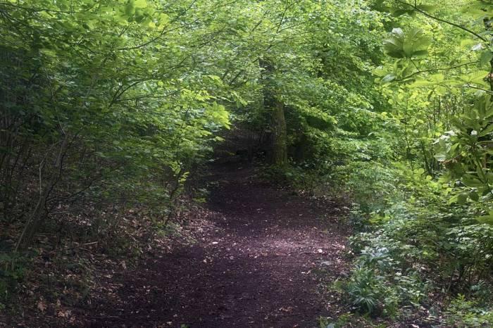 un sentiero di montagna appena pulito dai volontari